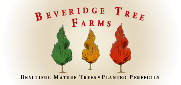 Beveridge Tree Farms - Trees and Landscaping Gilford Ontario